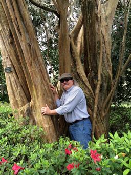 Felder Hugging America's Oldest Crape Myrtle