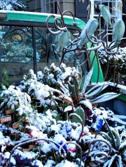 All-Weather Plants