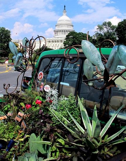 In Front of US Botanic Garden