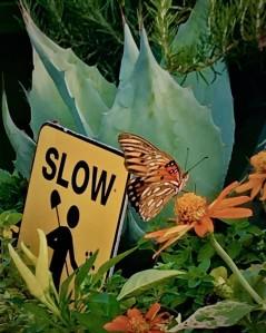 Moving Pollinator Garden