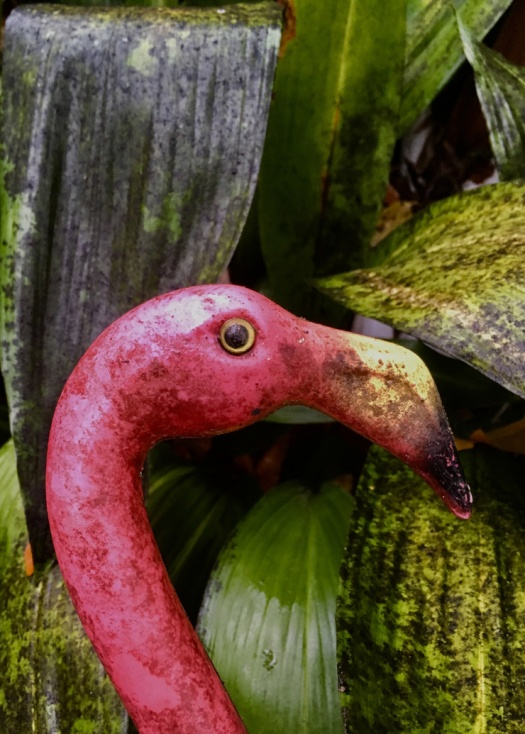 Sooty Mold Patina on Pink Flamingo