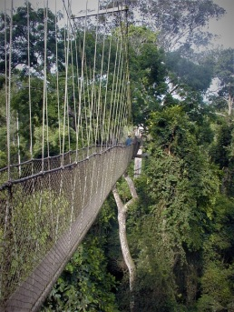 Suspension Bridge above Gorge