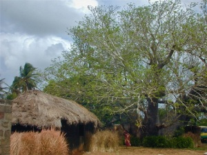 Traditional Hut with Baobab Tree