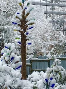 Bottle Tree in Snow