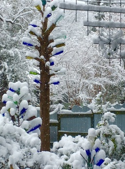 Bottle Tree in Snow