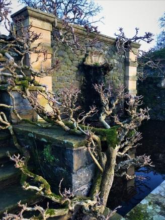 Wisteria Vine in Winter