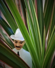 senor misterioso in tropical plant