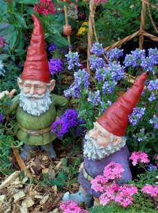 Pondering gnomes