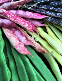 Heirloom beans are just a few of the fine vegetables on display