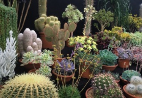 Low-maintenance cacti and succulents continue to trend