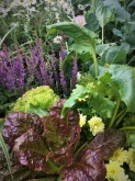 Mixed veg and flowers give home gardeners good ideas