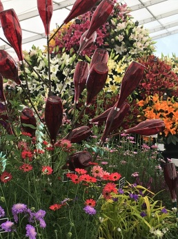 Rare red bottle tree in English flower show