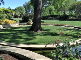 Artificial turf looks and works great on this tree island in the Dallas Arboretum