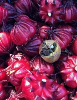 Okra-like roselle (Hibiscus sabdariffa)