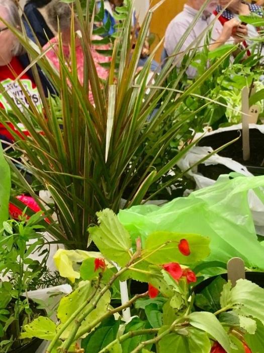 Sheer assortment of plants is garden boggling
