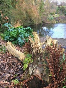 One-stump Stumpery by Lake