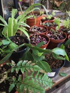 Variety of Plants