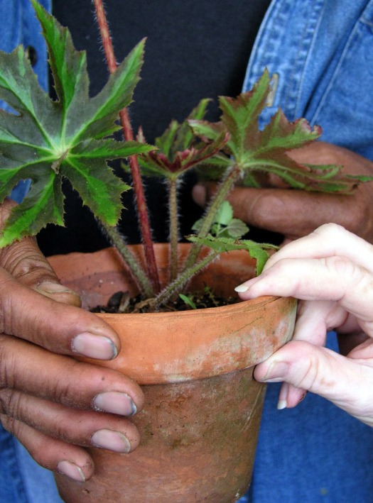 Hands sharing a plant